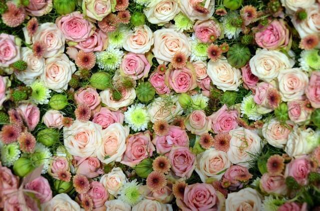 blutenmeer-pink-rose-romantic-158697-1